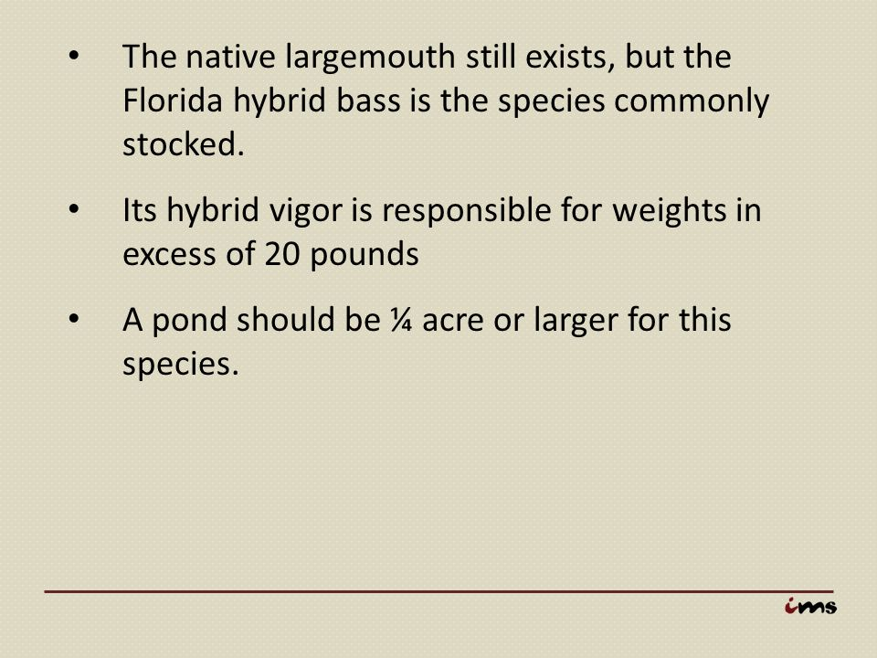 The native largemouth still exists, but the Florida hybrid bass is the species commonly stocked. Its hybrid vigor is responsible for weights in excess