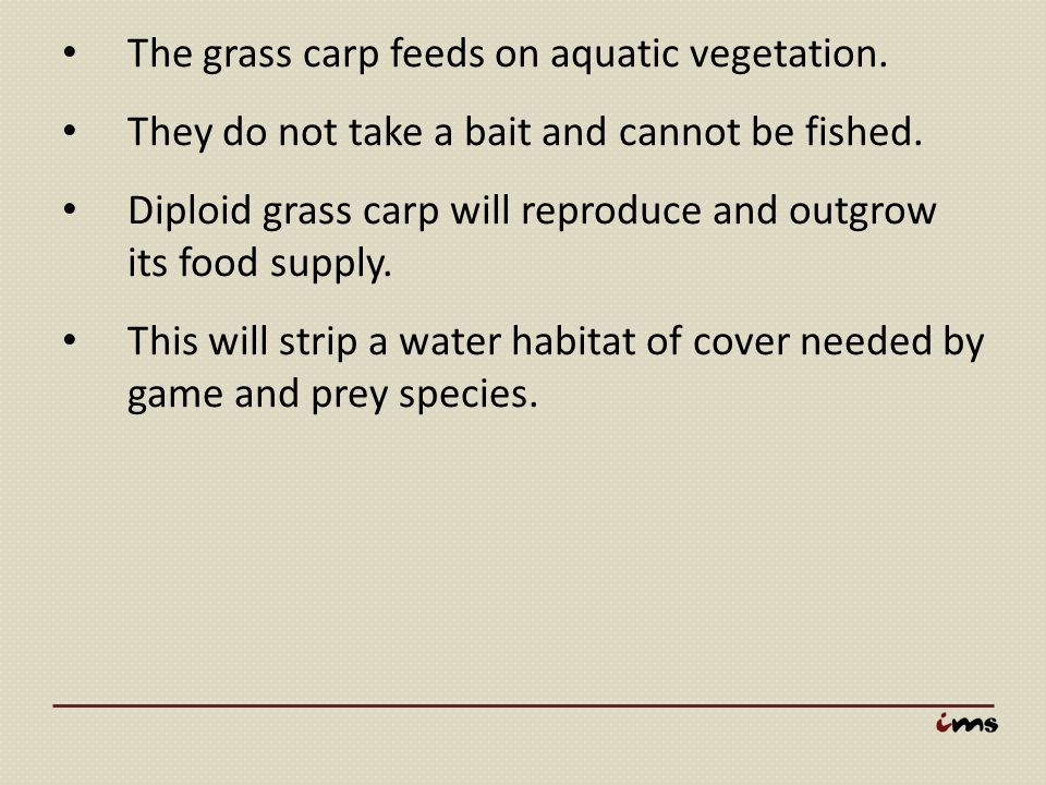 The grass carp feeds on aquatic vegetation. They do not take a bait and cannot be fished. Diploid grass carp will reproduce and outgrow its food suppl