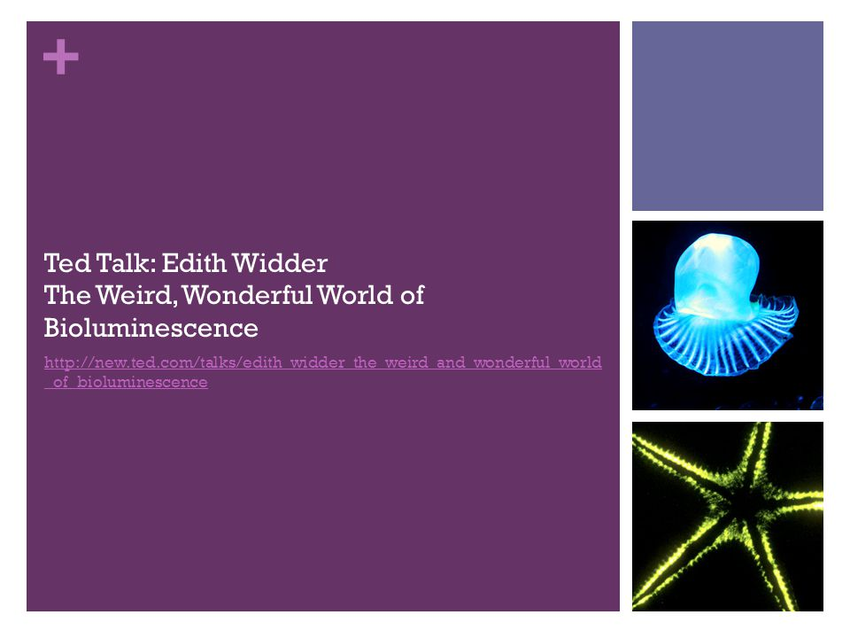 + Ted Talk: Edith Widder The Weird, Wonderful World of Bioluminescence http://new.ted.com/talks/edith_widder_the_weird_and_wonderful_world _of_bioluminescence