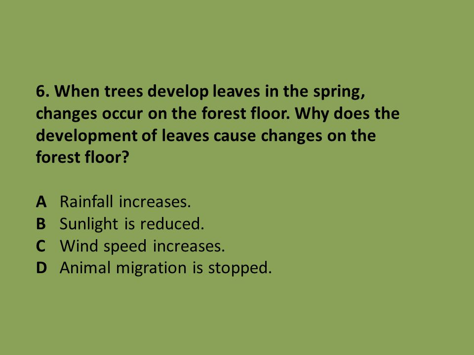 6.When trees develop leaves in the spring, changes occur on the forest floor.