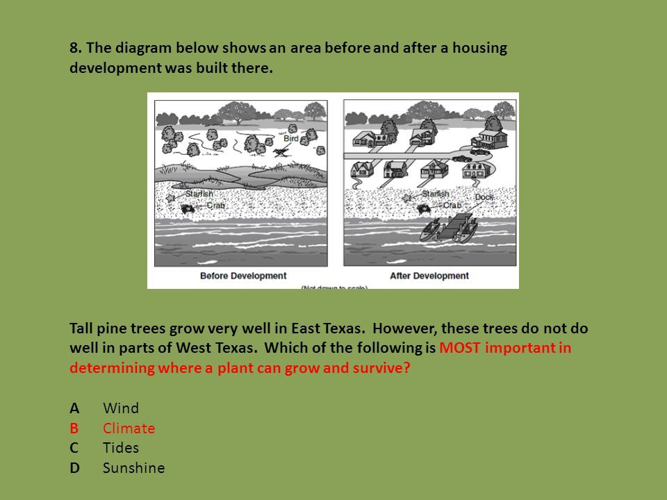 8. The diagram below shows an area before and after a housing development was built there. Tall pine trees grow very well in East Texas. However, thes