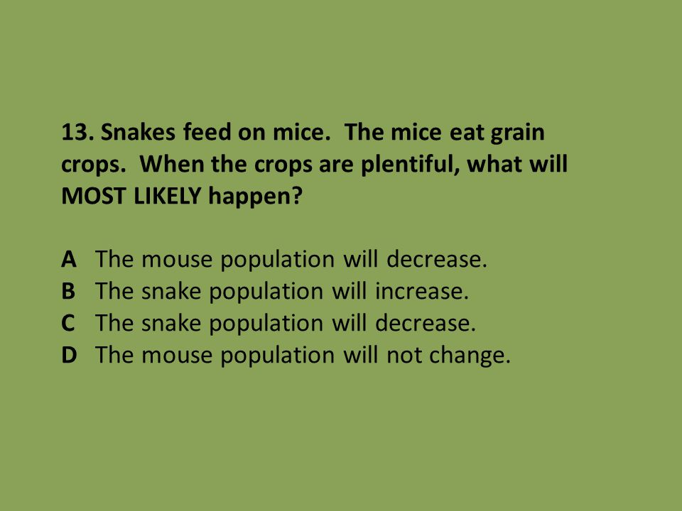 13. Snakes feed on mice. The mice eat grain crops. When the crops are plentiful, what will MOST LIKELY happen? AThe mouse population will decrease. BT