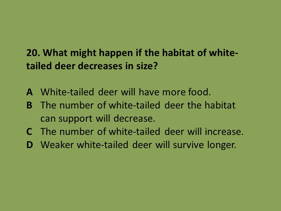 20. What might happen if the habitat of white- tailed deer decreases in size? AWhite-tailed deer will have more food. BThe number of white-tailed deer