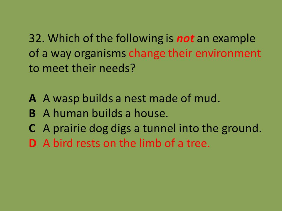 32. Which of the following is not an example of a way organisms change their environment to meet their needs? A A wasp builds a nest made of mud. B A