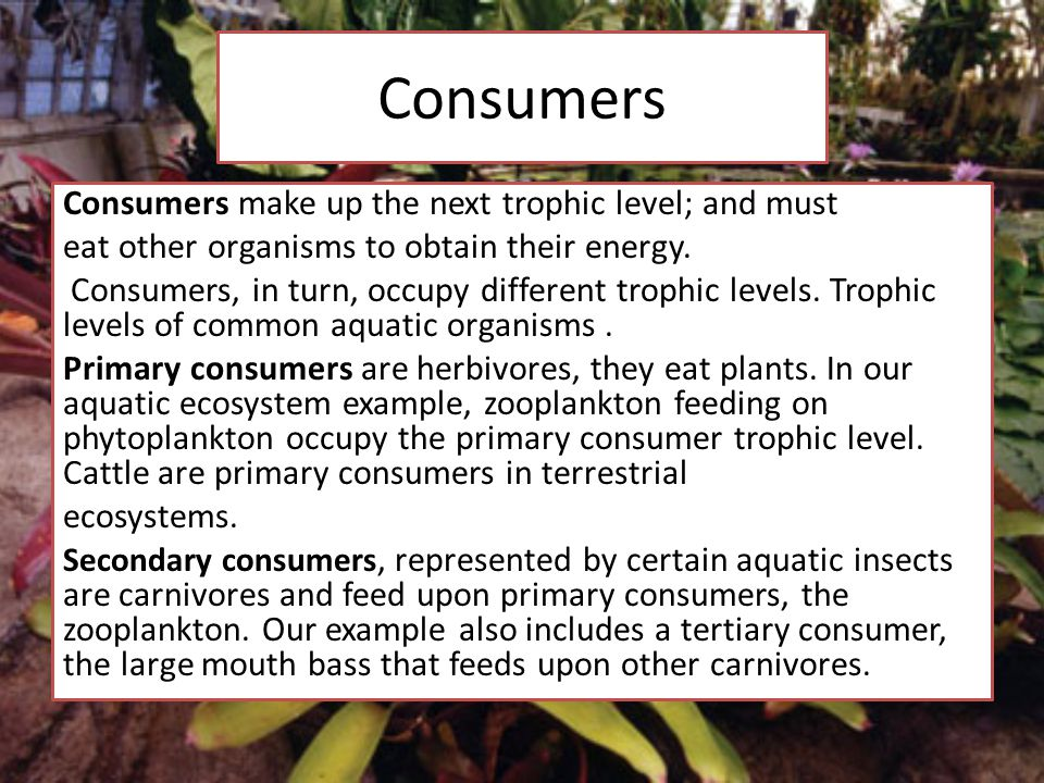 Consumers Consumers make up the next trophic level; and must eat other organisms to obtain their energy.