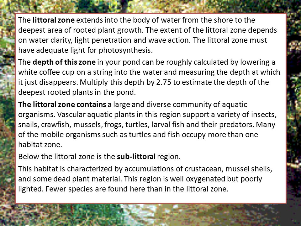 The littoral zone extends into the body of water from the shore to the deepest area of rooted plant growth.