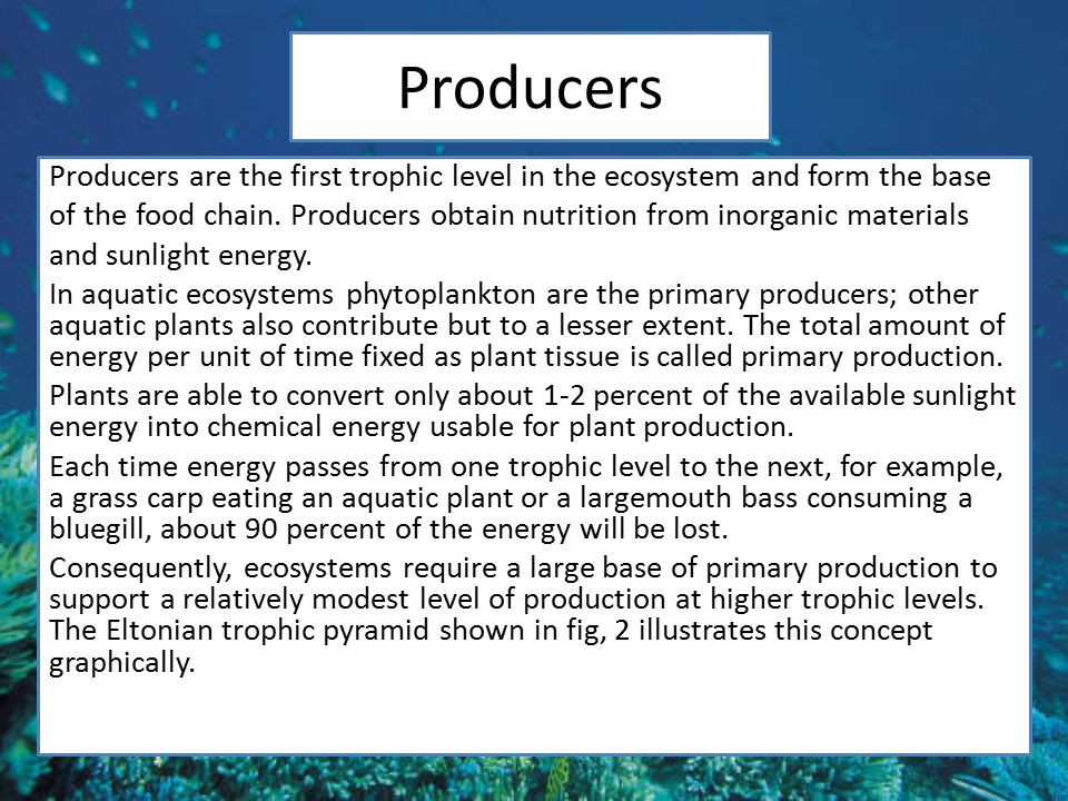 Producers Producers are the first trophic level in the ecosystem and form the base of the food chain.
