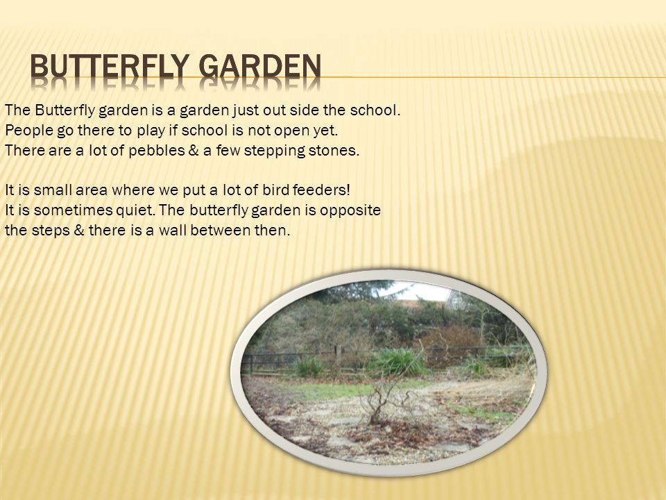 The Butterfly garden is a garden just out side the school.