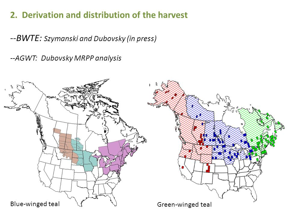2. Derivation and distribution of the harvest --BWTE: Szymanski and Dubovsky (in press) --AGWT: Dubovsky MRPP analysis Blue-winged teal Green-winged t