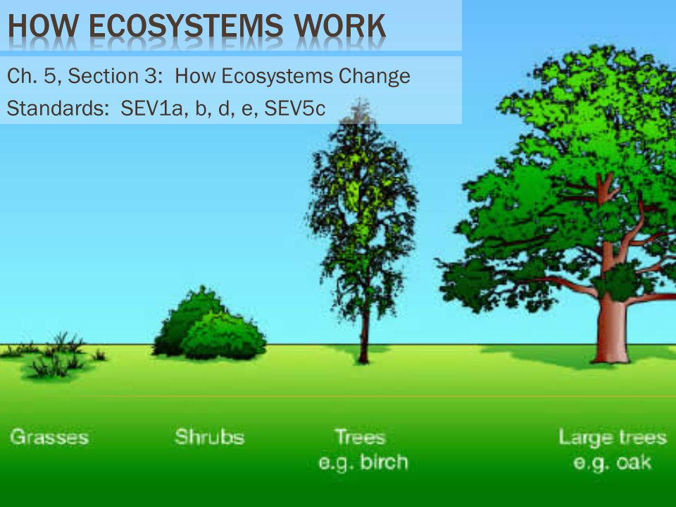 Ch. 5, Section 3: How Ecosystems Change Standards: SEV1a, b, d, e, SEV5c