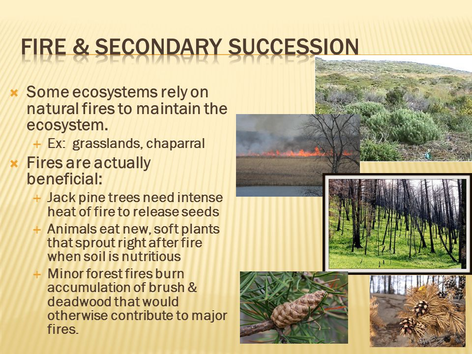  Some ecosystems rely on natural fires to maintain the ecosystem.