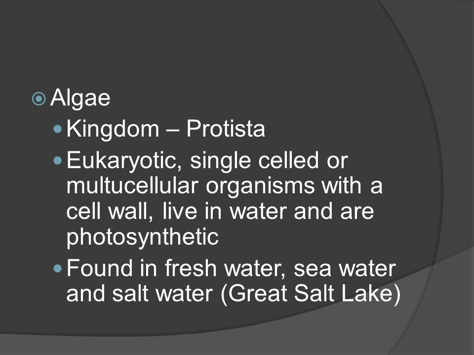  Algae Kingdom – Protista Eukaryotic, single celled or multucellular organisms with a cell wall, live in water and are photosynthetic Found in fresh water, sea water and salt water (Great Salt Lake)