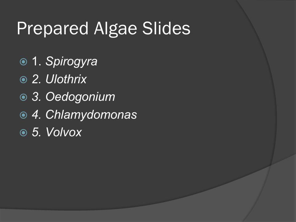 Prepared Algae Slides  1. Spirogyra  2. Ulothrix  3. Oedogonium  4. Chlamydomonas  5. Volvox