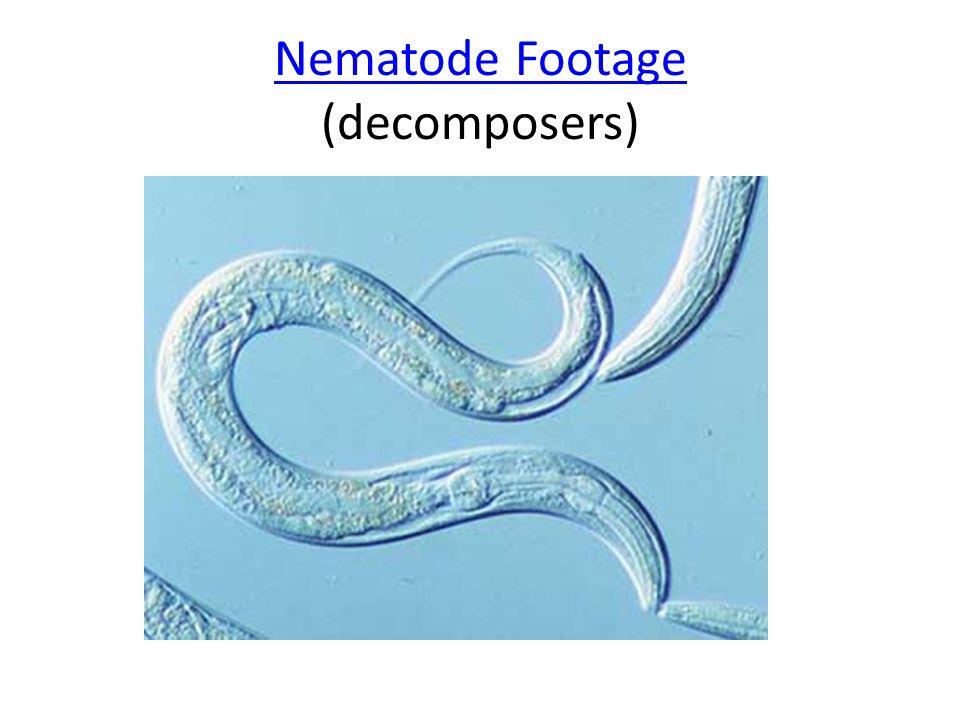 Nematode Footage Nematode Footage (decomposers)
