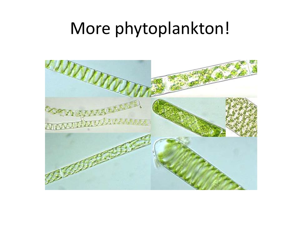 More phytoplankton!