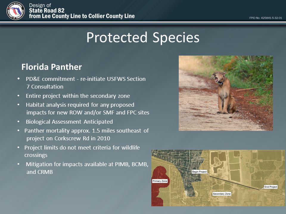 Protected Species Florida Panther PD&E commitment - re-initiate USFWS Section 7 Consultation Entire project within the secondary zone Habitat analysis