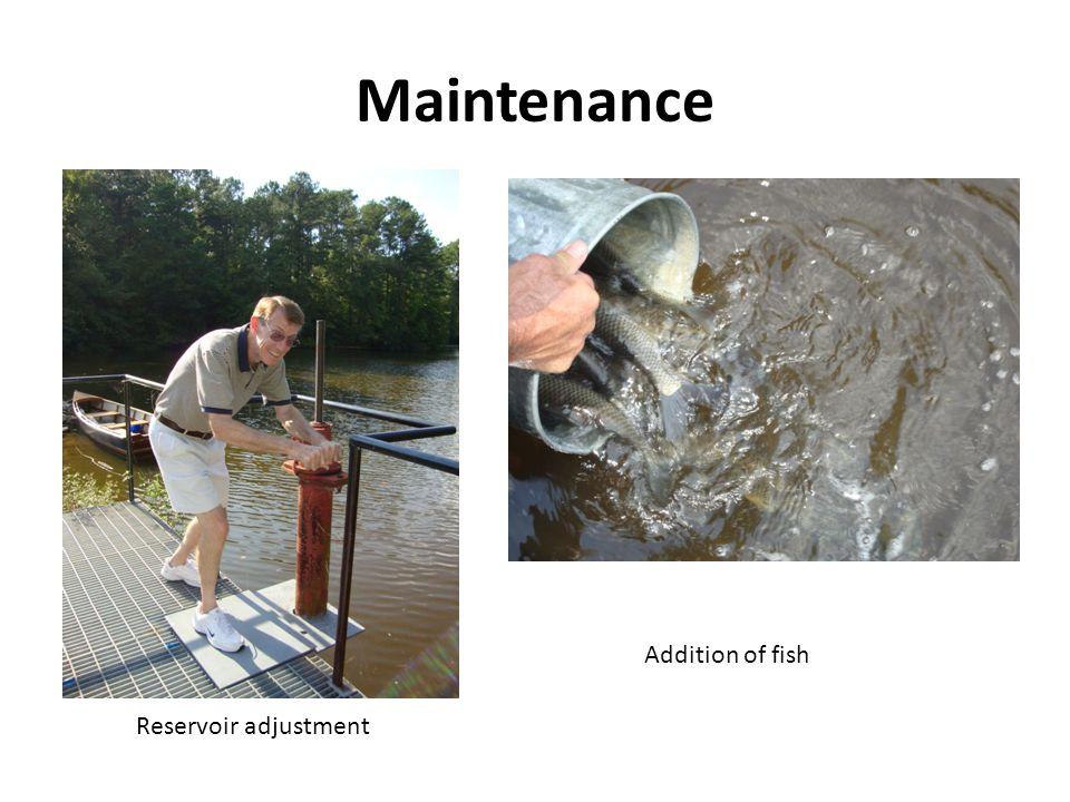Maintenance Reservoir adjustment Addition of fish