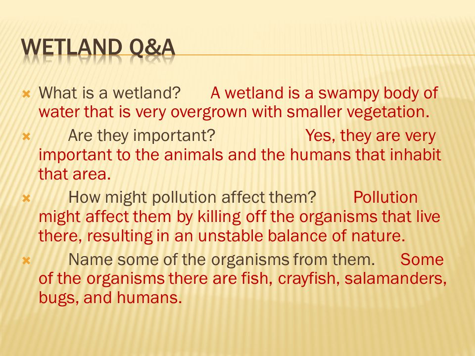  What is a wetland?A wetland is a swampy body of water that is very overgrown with smaller vegetation.  Are they important?Yes, they are very import