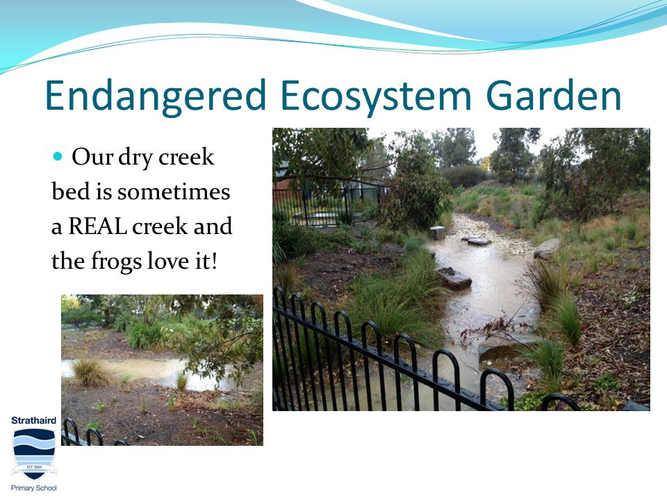 Endangered Ecosystem Garden Our dry creek bed is sometimes a REAL creek and the frogs love it!