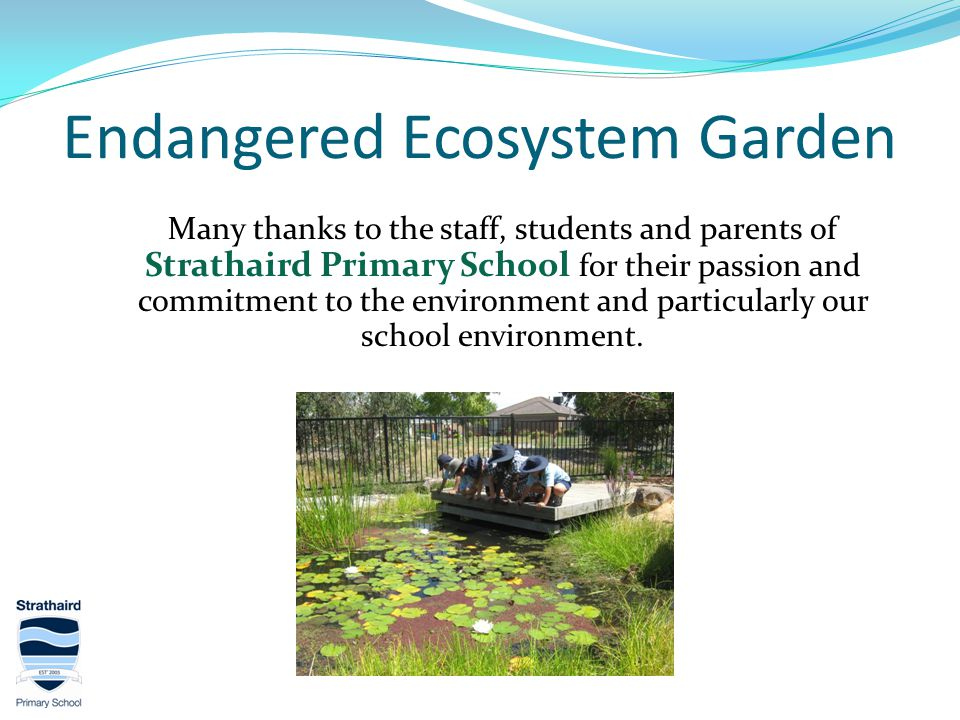 Endangered Ecosystem Garden Many thanks to the staff, students and parents of Strathaird Primary School for their passion and commitment to the environment and particularly our school environment.