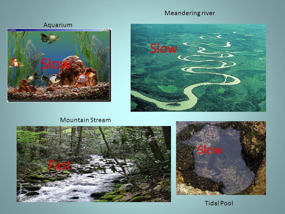 Slow Aquarium Meandering river Mountain Stream Fast Tidal Pool Slow