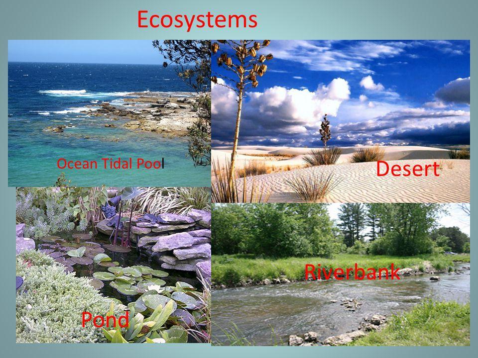 Ecosystems Ocean Tidal Pool Desert Pond Riverbank