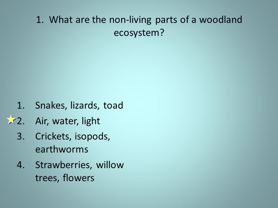 1. What are the non-living parts of a woodland ecosystem.