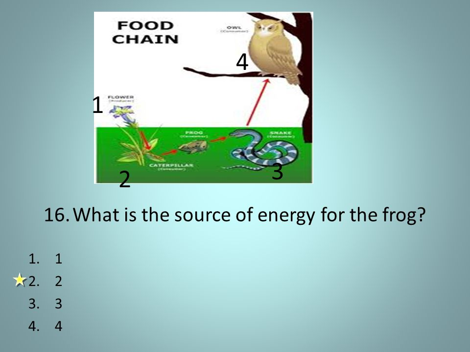16. What is the source of energy for the frog 1 2 3 4 1.1 2.2 3.3 4.4