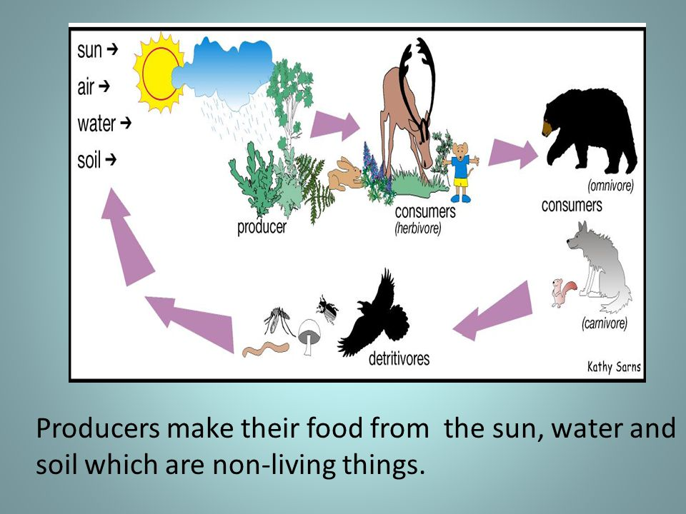 Producers make their food from the sun, water and soil which are non-living things.