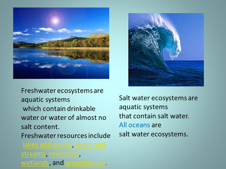 Freshwater ecosystems are aquatic systems which contain drinkable water or water of almost no salt content.