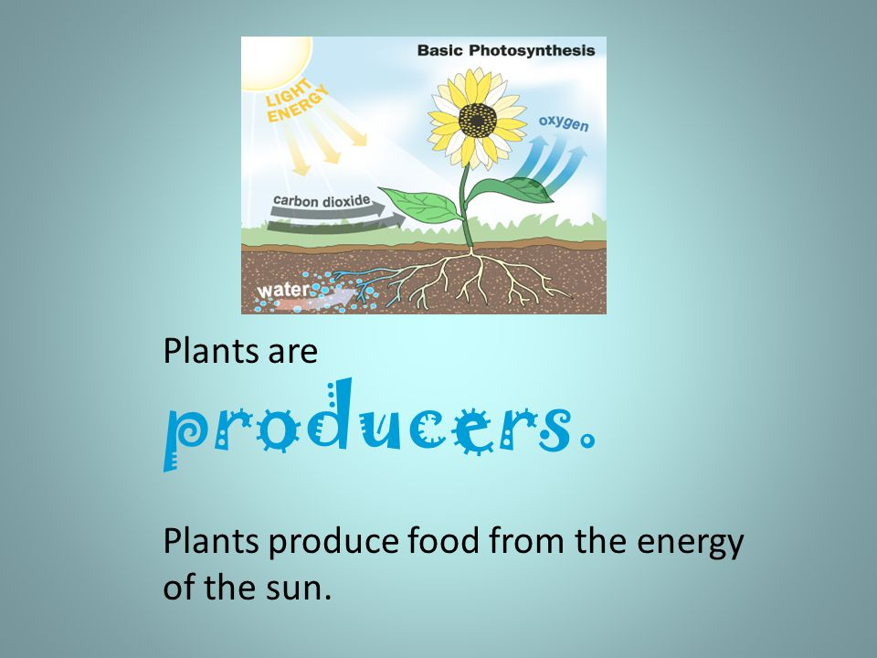 Plants are producers. Plants produce food from the energy of the sun..