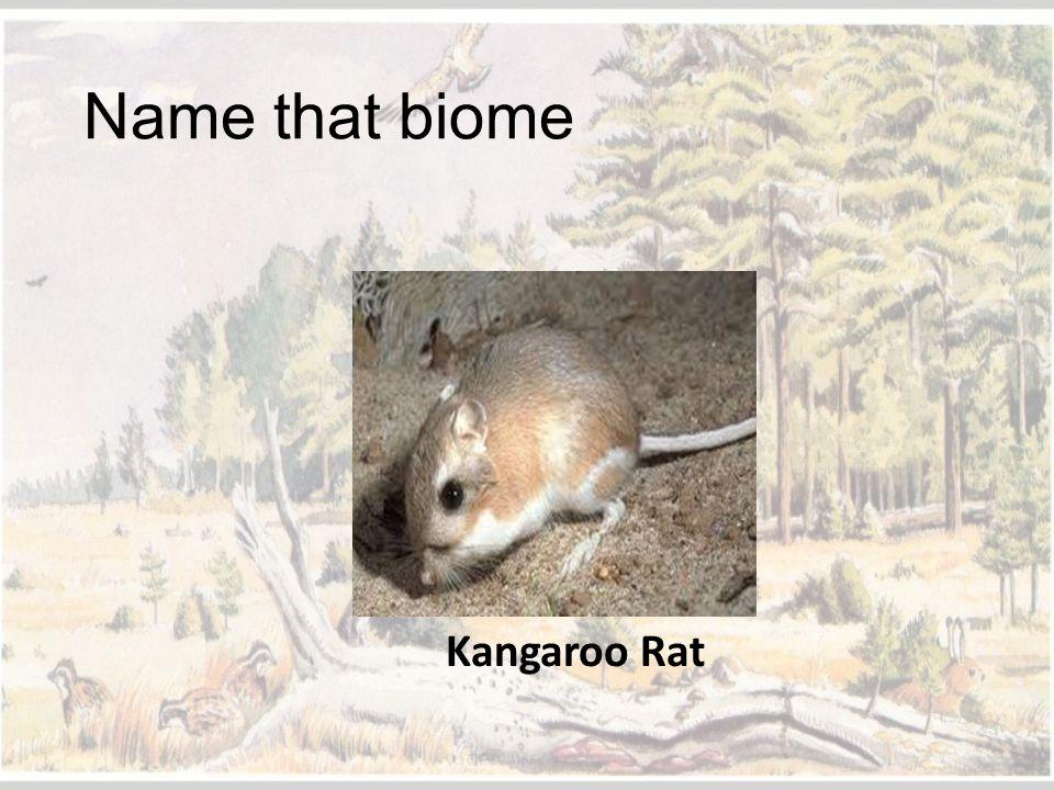 Name that biome Kangaroo Rat