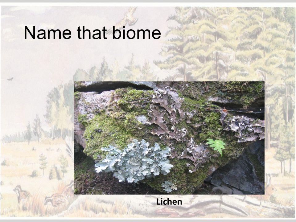 Name that biome Lichen