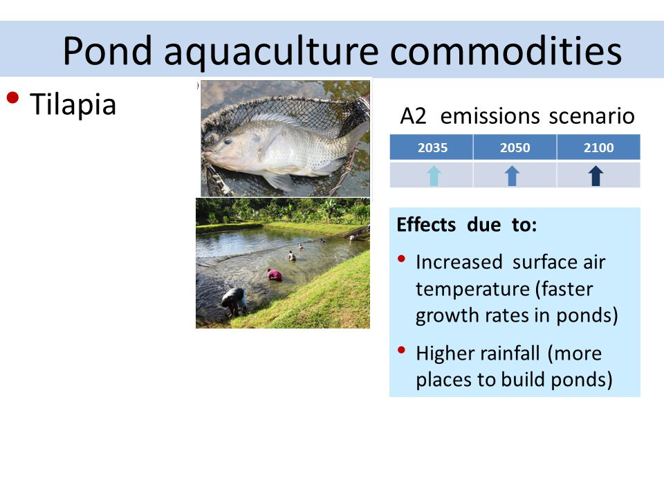 Pond aquaculture commodities A2 emissions scenario Effects due to: Increased surface air temperature (faster growth rates in ponds) Higher rainfall (m
