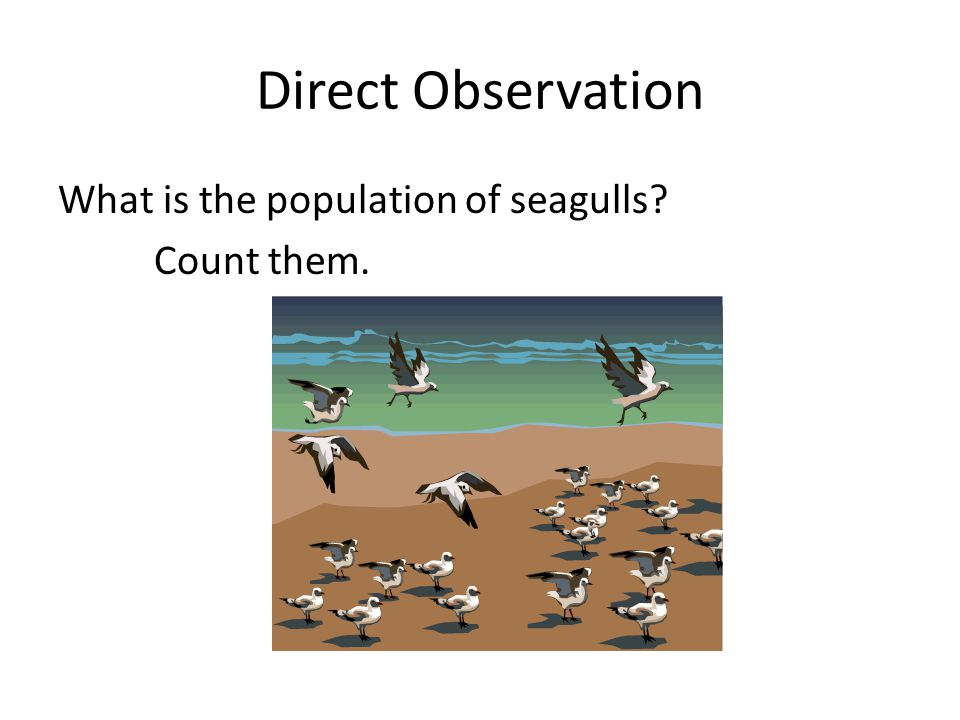 Direct Observation What is the population of seagulls Count them.
