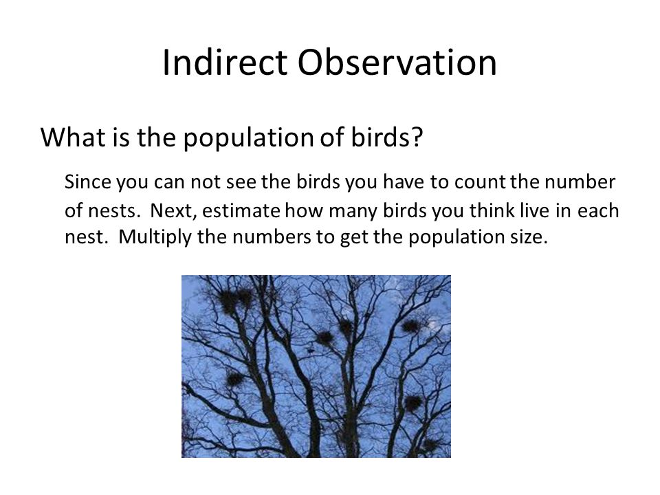 Indirect Observation What is the population of birds.