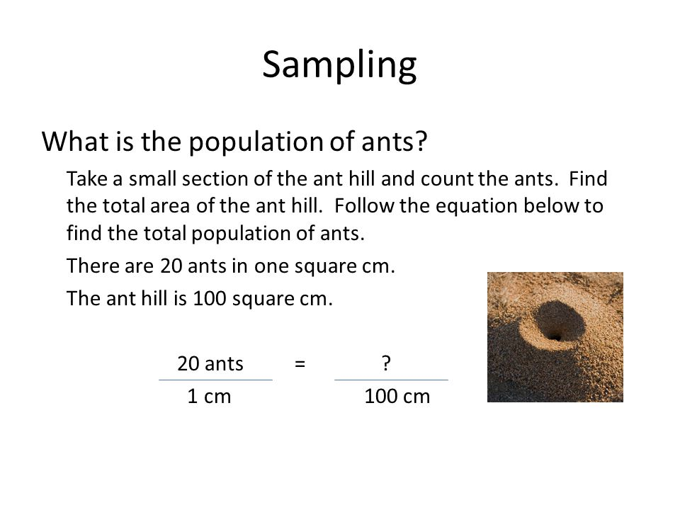 Sampling What is the population of ants. Take a small section of the ant hill and count the ants.