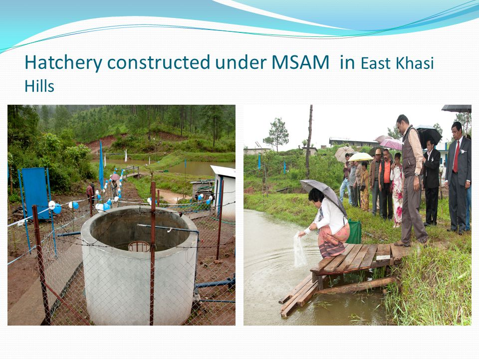 Hatchery constructed under MSAM in East Khasi Hills