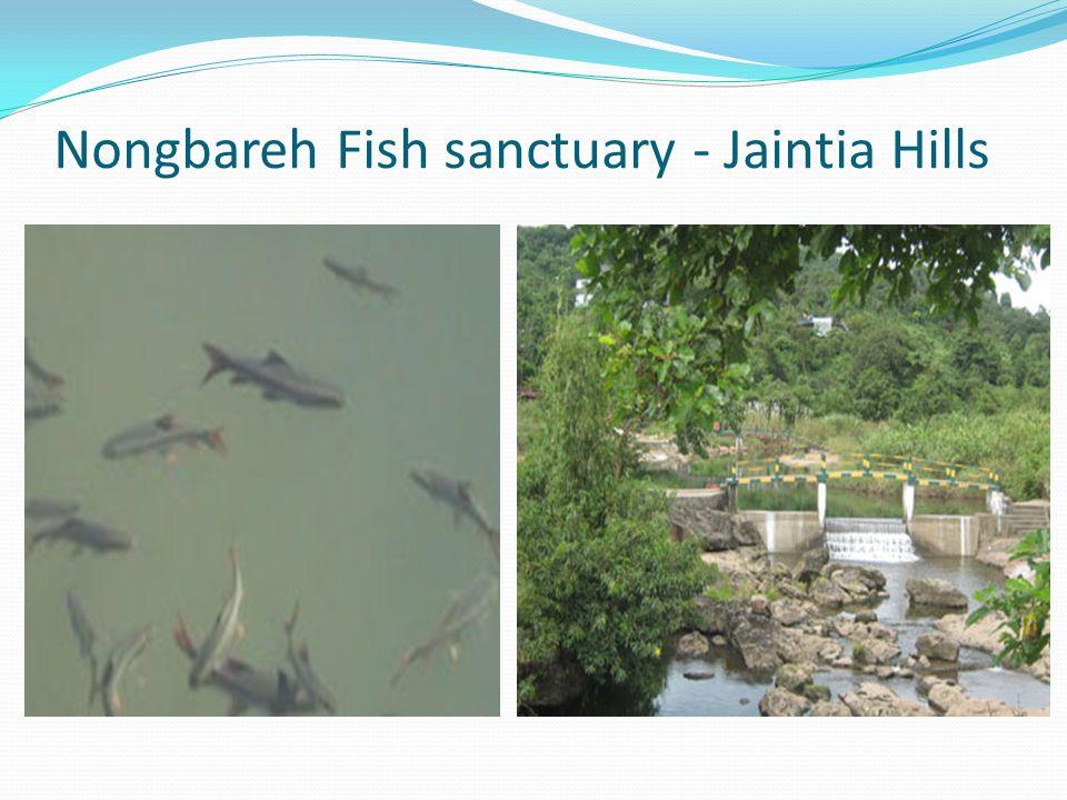 Nongbareh Fish sanctuary - Jaintia Hills