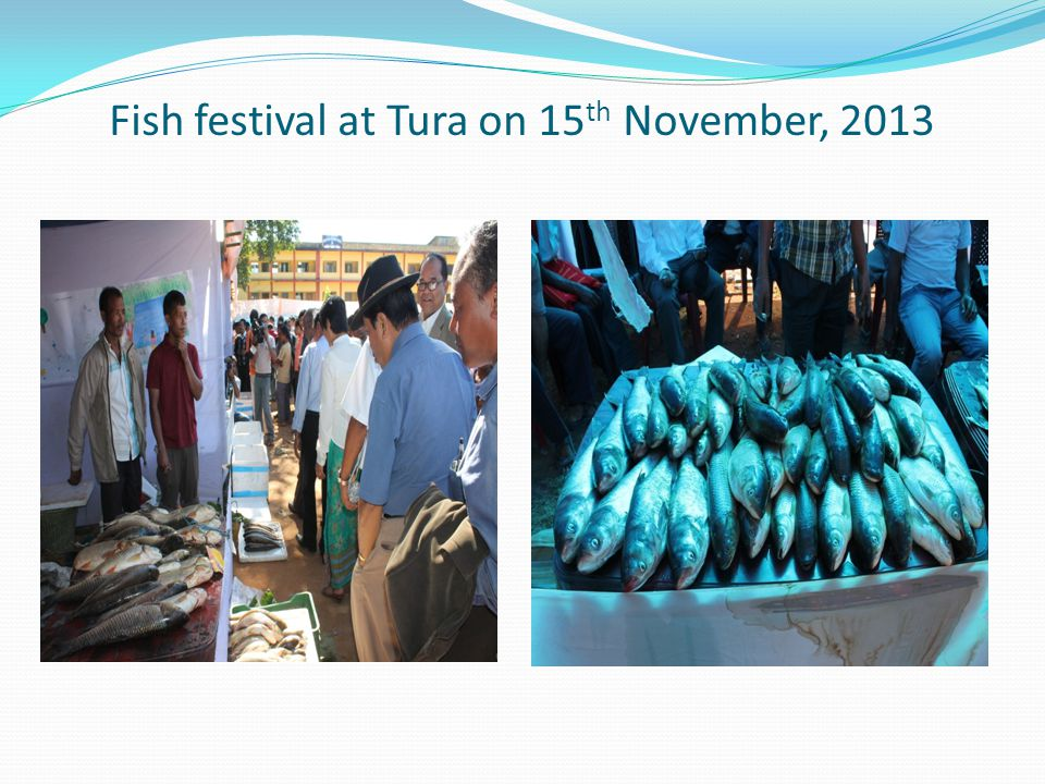 Fish festival at Tura on 15 th November, 2013
