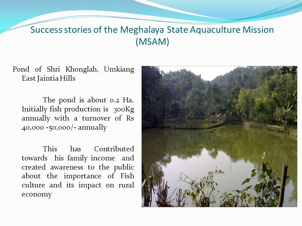 Success stories of the Meghalaya State Aquaculture Mission (MSAM) Pond of Shri Khonglah, Umkiang East Jaintia Hills The pond is about 0.2 Ha.