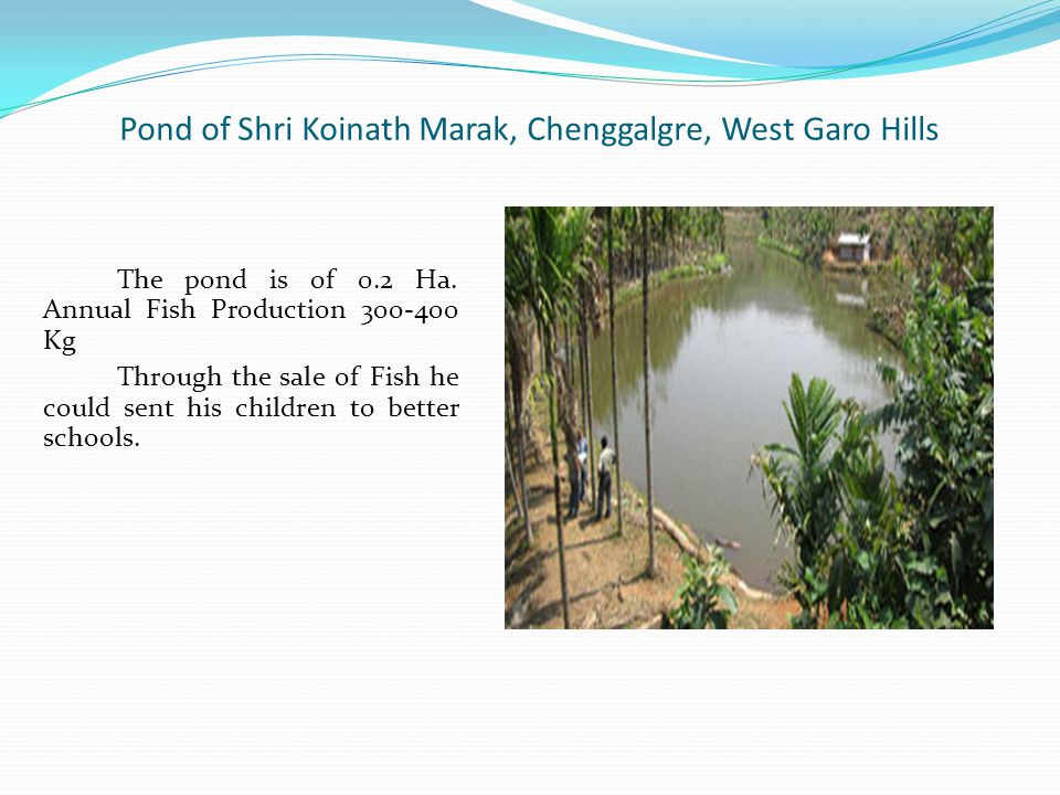 Pond of Shri Koinath Marak, Chenggalgre, West Garo Hills The pond is of 0.2 Ha.