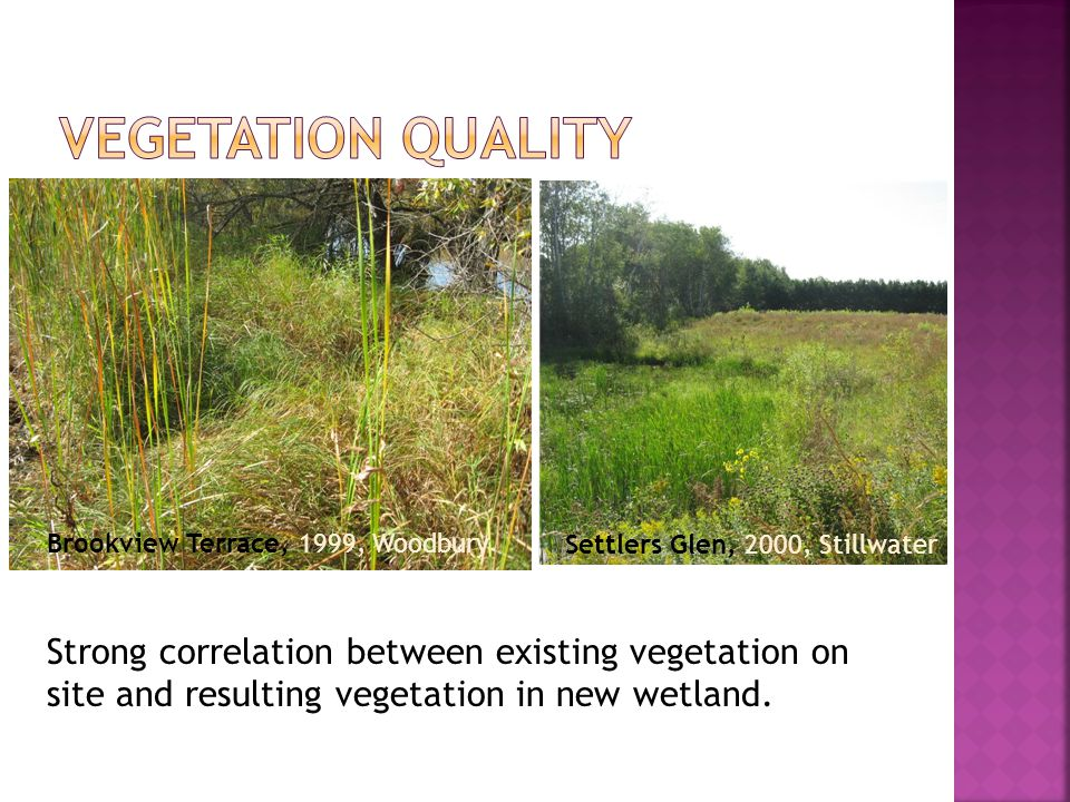 Brookview Terrace, 1999, Woodbury Settlers Glen, 2000, Stillwater Strong correlation between existing vegetation on site and resulting vegetation in new wetland.