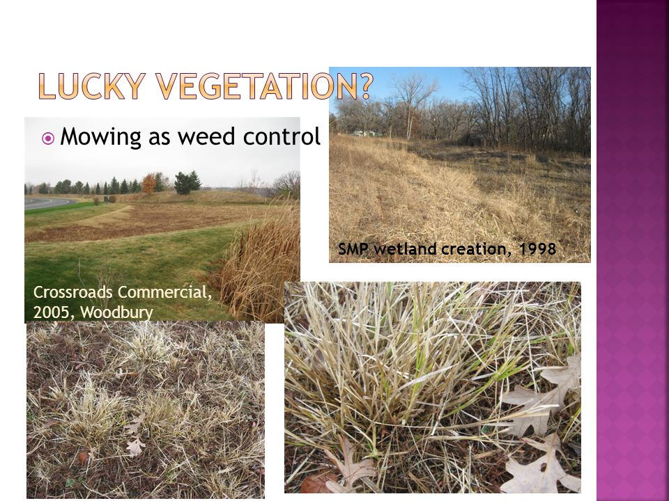  Mowing as weed control SMP wetland creation, 1998 Crossroads Commercial, 2005, Woodbury