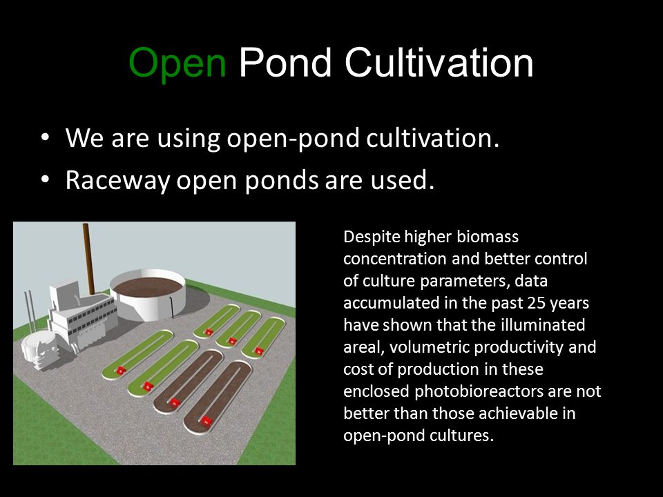 Open Pond Cultivation We are using open-pond cultivation. Raceway open ponds are used. Despite higher biomass concentration and better control of cult