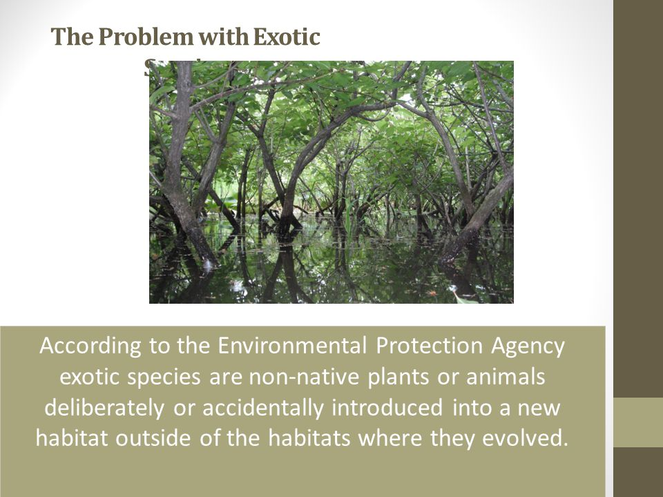 The Problem with Exotic Species According to the Environmental Protection Agency exotic species are non-native plants or animals deliberately or accid