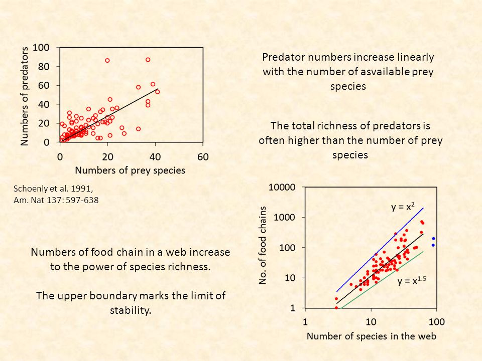 Numbers of food chain in a web increase to the power of species richness.
