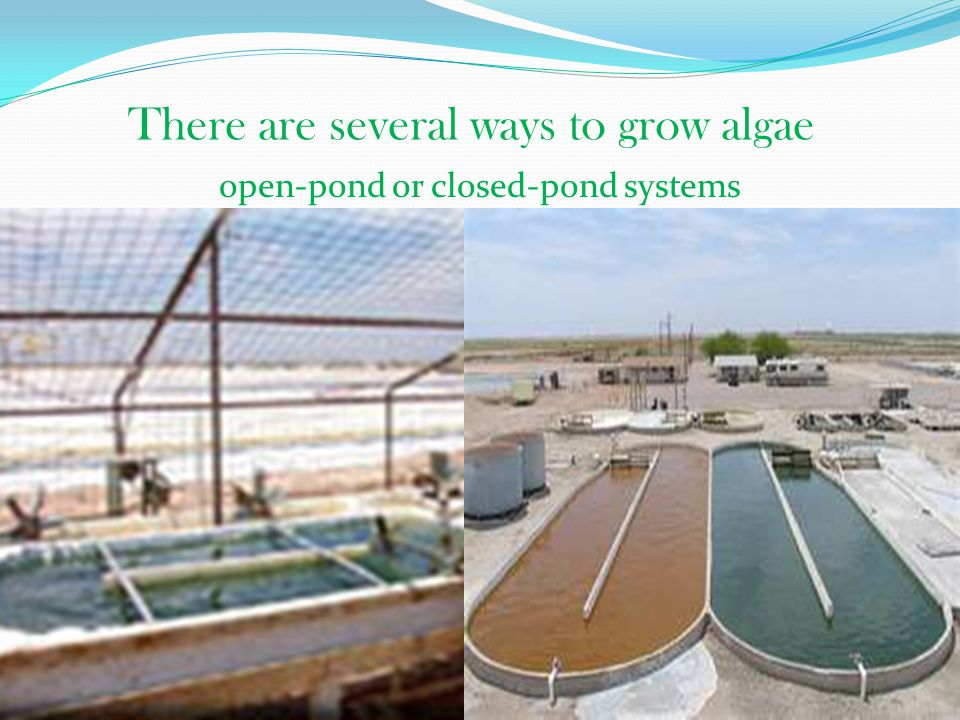 There are several ways to grow algae open-pond or closed-pond systems