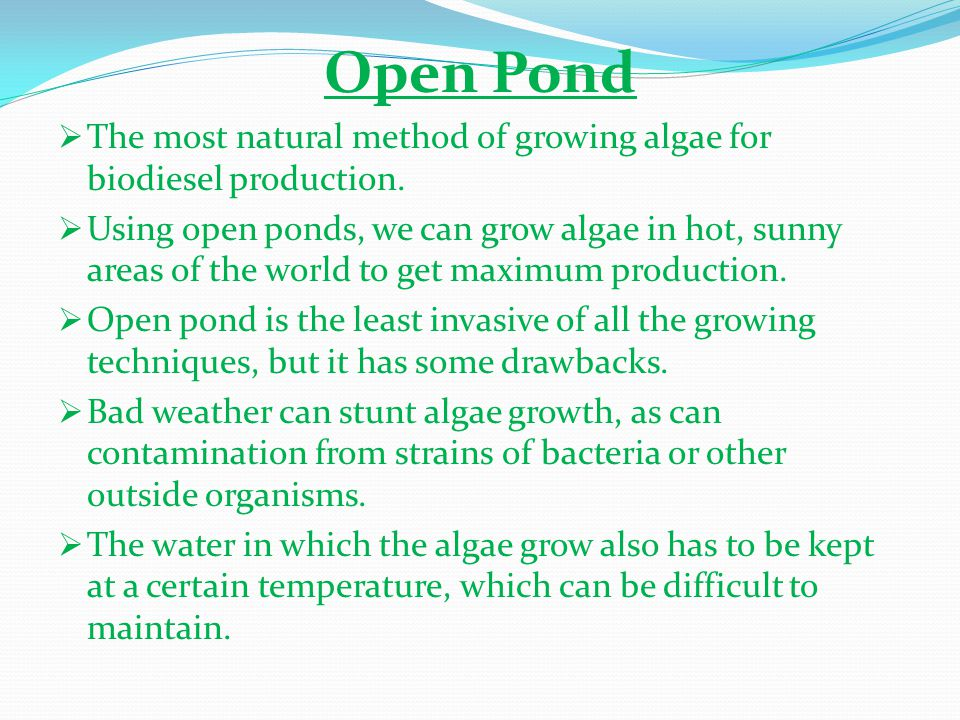 Open Pond  The most natural method of growing algae for biodiesel production.  Using open ponds, we can grow algae in hot, sunny areas of the world