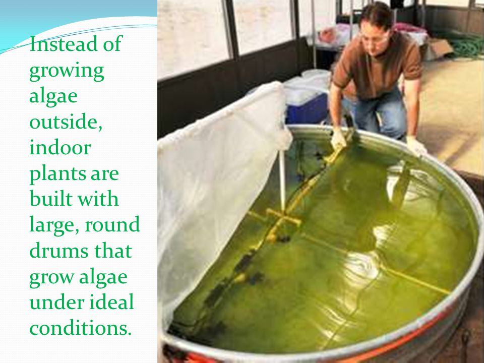 Instead of growing algae outside, indoor plants are built with large, round drums that grow algae under ideal conditions.